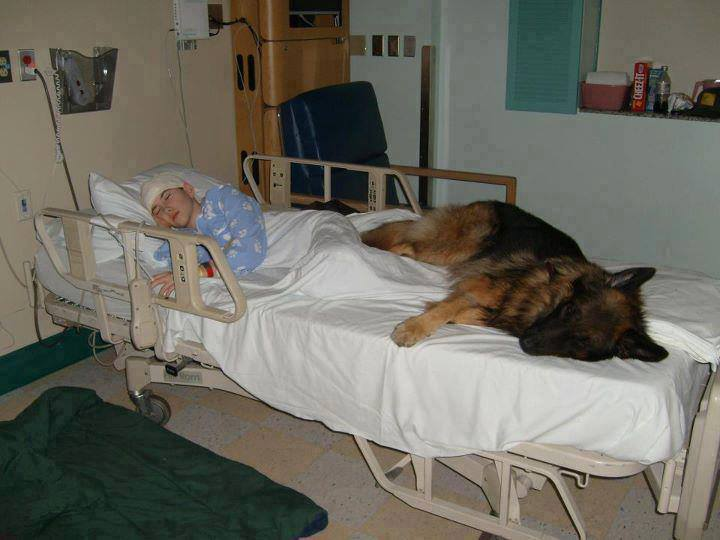 dog on hospital bed